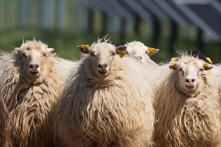 saules-parkai-avys